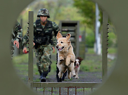 CHONGQING, April 29, 2017  Police dogs are trained at a training base in Chongqing, southwest China, April 29, 2017.  wf) (Credit Image: © Cao Feng/Xinhua via ZUMA Wire)