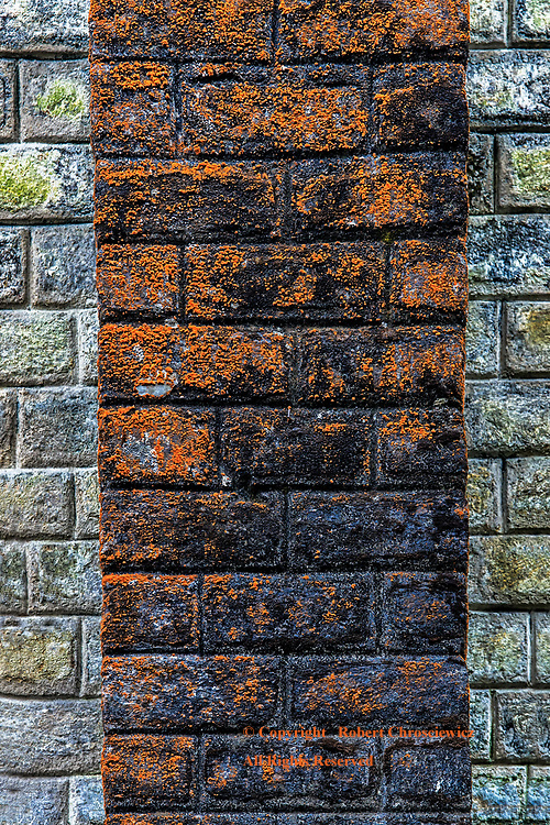 Coloured Lines: Years after fire devastated the Hotel Mount Everest, multi coloured lichen cover contrasting aspects of the brick walls, Darjeeling India.