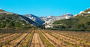 A vineyard and the mountain Les Alpilles at Les Baux de Provence, Bouches du Rhone, France