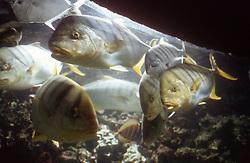 Fish swimming in aquarium Spain,