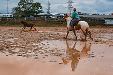 Prova de laço da raça Paint Horse