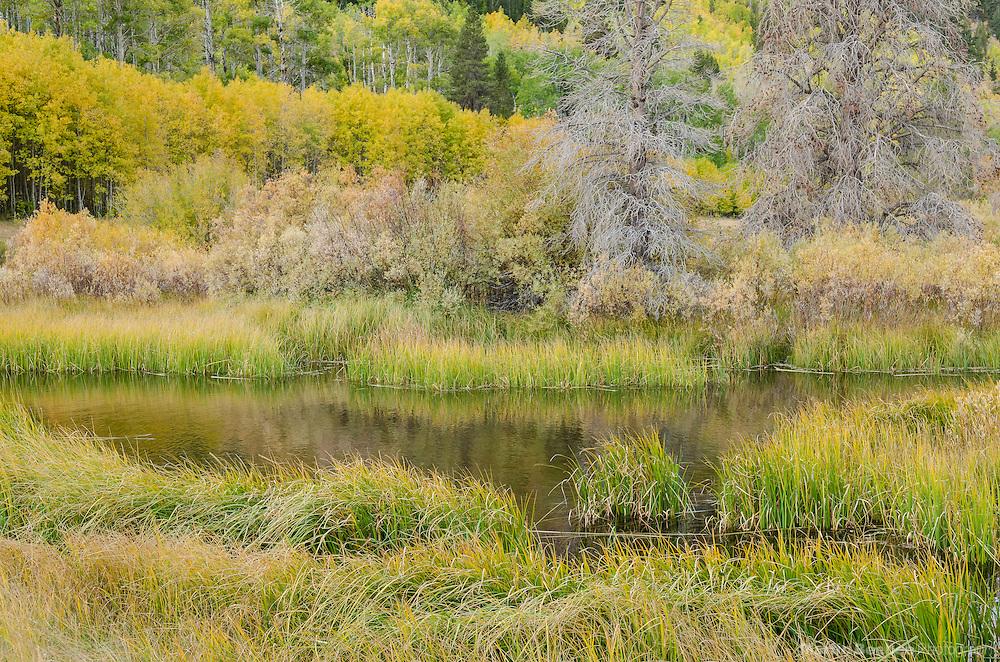 Beaver pond, fall, Green Creek area, Toiyabe National Forest, California