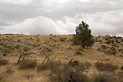 An old rural road, barbed wire cattle fence, and juniper tree in the central oregon desert.