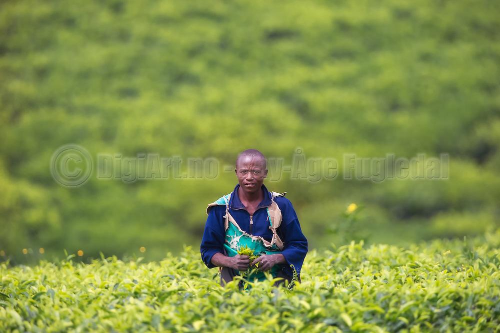 The man in the field is captured in Rwanda, while driving through a area with tea plantations   Mannen i åkeren er fotografert i Rwanda, på vei gjennom et område med te plantasjer.