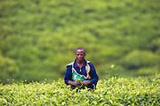 The man in the field is captured in Rwanda, while driving through a area with tea plantations | Mannen i åkeren er fotografert i Rwanda, på vei gjennom et område med te plantasjer.
