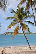 Sunbay beach in Vieques Island, Puerto Rico.