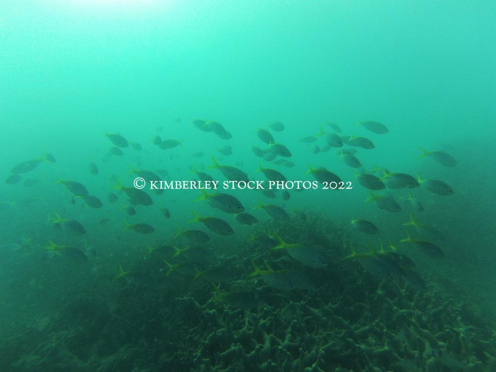 Underwater Macleay Island