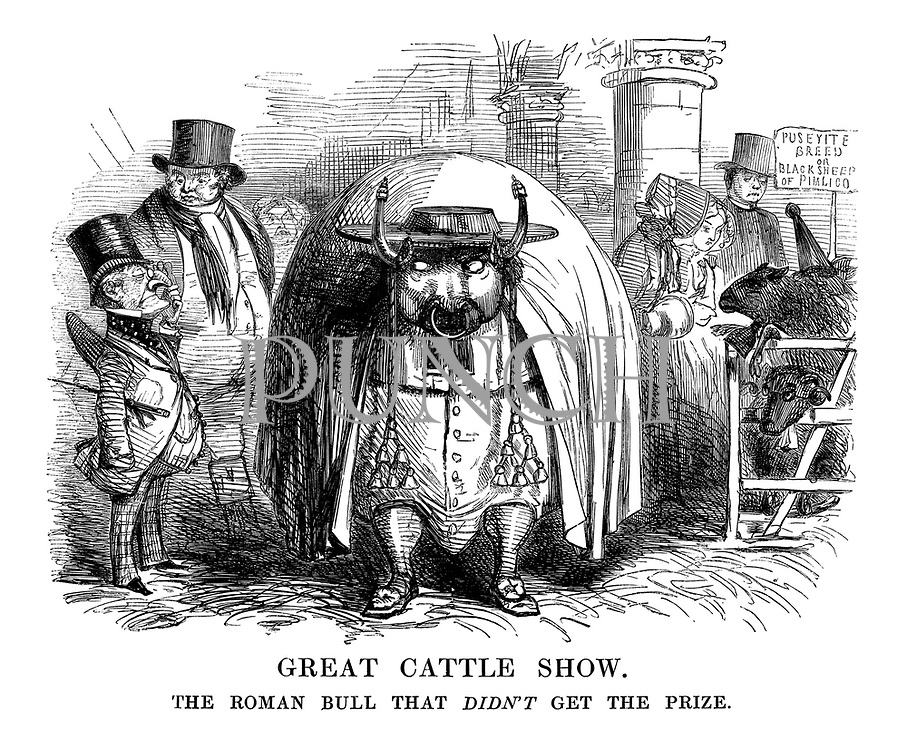 The Great Cattle Show. The Roman Bull that didn't get the prize.