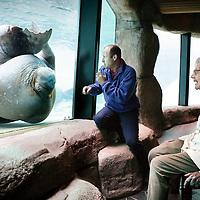 """Nederland,Harderwijk ,4 februari 2008..Demente bejaarden worden getracteerd op een ochtend Dolfinarium Harderwijk waar ze kunnen genieten van Dolfijnen en walrussen...Het is al langere tijd bekend dat dieren een positief effect hebben op het welzijn van dementerende ouderen. De interactie met dolfijnen, en vooral walrussen lijkt deze ouderen nog extra te prikkelen. Het Nationaal Fonds Ouderenhulp organiseert op 4 februari 2008 een ontmoeting tussen dementerende ouderen en dolfijnen in het Dolfinarium van Harderwijk. Tijdens deze voor Nederland unieke activiteit 'spelen' en 'communiceren' dementerende ouderen met dolfijnen en walrussen. Ze genieten niet alleen van deze enorme dieren, ook het feit dat ze weer ongedwongen contact kunnen maken, heeft een positief effect. """"Een dame die weinig spreekt, gaf in duidelijke bewoordingen aan hoe prachtig zij het vond,"""" aldus Jan Romme, directeur van het Nationaal Fonds Ouderenhulp...Trainers van het Dolfinarium en ergo/dierengedragstherapeuten van Laurens, de Rotterdamse organisatie voor wonen, diensten en zorg, hebben intensief samengewerkt omeen toegankelijk en interactiefprogramma samen te stellen voor deze bijzondere doelgroep. Door het spel kan een opening worden gevonden bij mensen die door hun ziekte moeilijk benaderbaar zijn. De onrust, angst of onzekerheid die we bij veel dementerende ouderen zien, vermindert tijdelijk. Via foto's en video's kan het geluksgevoel bij de ouderen later opnieuw worden opgeroepen, zodat deze ontmoeting ook op langere termijn een positief effect heeft op hun welzijn."""