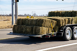Rectangular bales of hay being hauled on a double axle flatbed trailer