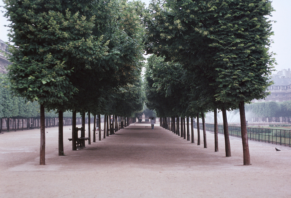 Rows of trees in the Palais-Royal Gardens, Paris, France