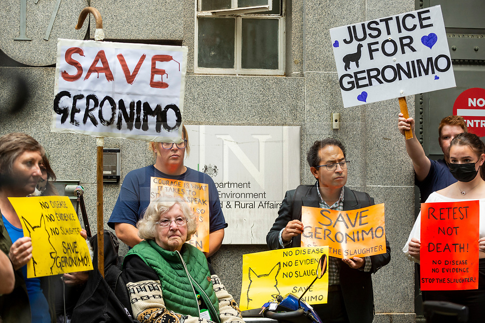 © Licensed to London News Pictures. 09/08/2021. LONDON, UK. Protesters outside the Department for Environment, Food and Rural Affairs (DEFRA) campaigning to save the life Geronimo the alpaca after Environment Secretary George Eustice defended a controversial decision to put down the animal that has twice tested positive for bovine tuberculosis.  Geronimo's owner, veterinary nurse Helen Macdonald, who breeds alpacas at her farm in Wickwar, south Gloucestershire, claims the tests used were inaccurate and wants Geronimo to receive a more accurate Actiphage test.  Photo credit: Stephen Chung/LNP