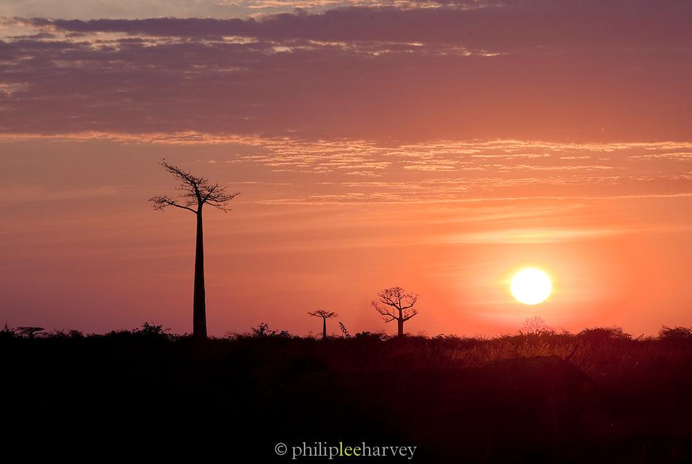 Sunset over trees and fields near Morondava, Madagascar