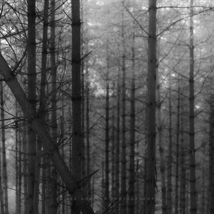 Another in my deeply unpopular infrared pine forest series