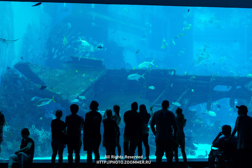 Silhouette of people in front of huge aquarium on Sentosa island, Singapore