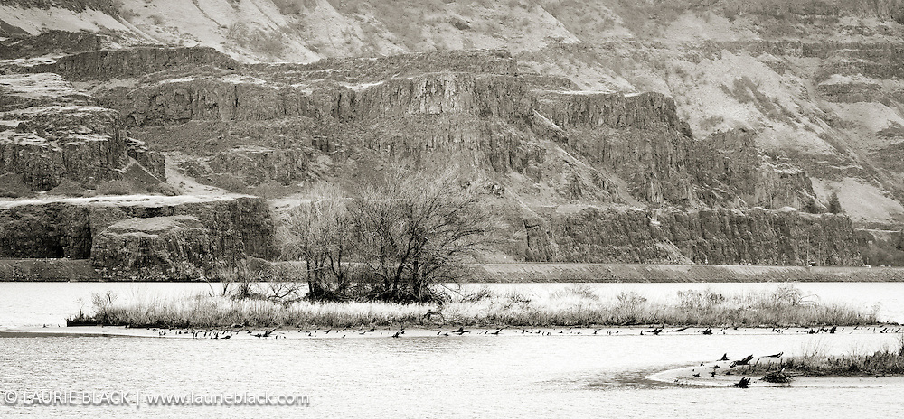 B&W photograph of the Columbia River in the Columbia Gorge on a serene winter day
