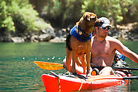 A kayaker brings his dog along for the adventure and paddles through The Black Canyon, Nevada.