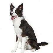 20140224 Medium Dogs