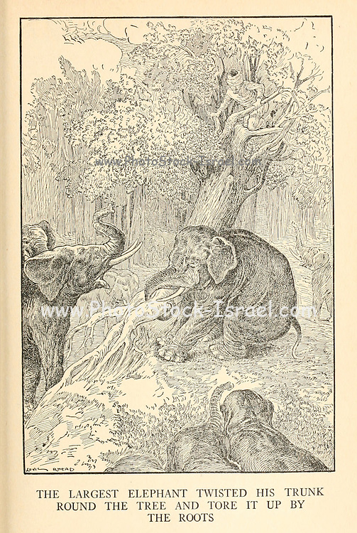 The Largest Elephant Twisted His Trunk Round The Tree And Tore It Up By The Roots from the book '  The Arabian nights' entertainments ' Test and Illustrations by Louis Rhead, Published  in New York by Harper & Brothers in 1916. In order to save her life, Sheherazade entertains the sultan by telling him wondrous stories