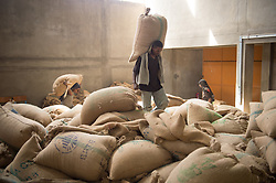 Laborers sort coffee beans at the Oromia Coffee Farmers Cooperative Union in Addis Ababa, December, 2012. Ethiopia is the world's seventh largest producer of coffee, and Africa's top producer. Half of the coffee is consumed by Ethiopians, and the country leads the continent in domestic consumption.The coffee production in Ethiopia is critical to the Ethiopian economy with about 25% of the population depending directly or indirectly on coffee for its livelihood.