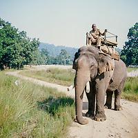 veteran mahout, Bandhavgarh National Park, India