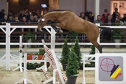 070, Casello van de Helle<br /> BWP Hengsten keuring Koningshooikt 2015<br /> © Hippo Foto - Dirk Caremans<br /> 21/01/16