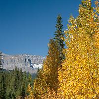 Fall Colors glow in Banff National Park, Alberta, Canada.