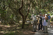 Tourists in Maritime forest<br /> Little St Simon's Island, Barrier Islands, Georgia<br /> USA
