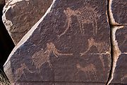 Petroglyph by San Bushman of Elephant<br /> Private game ranch<br /> Great Karoo<br /> SOUTH AFRICA