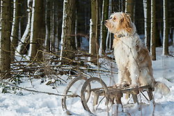 Dog sitting on a slide in snowy forest in winter, Bavaria, Germany