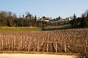 Vineyard. Chateau Bellefont Belcier, Saint Emilion, bordeaux, France