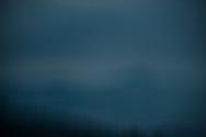 The North Carolina forest enveloped in fog.