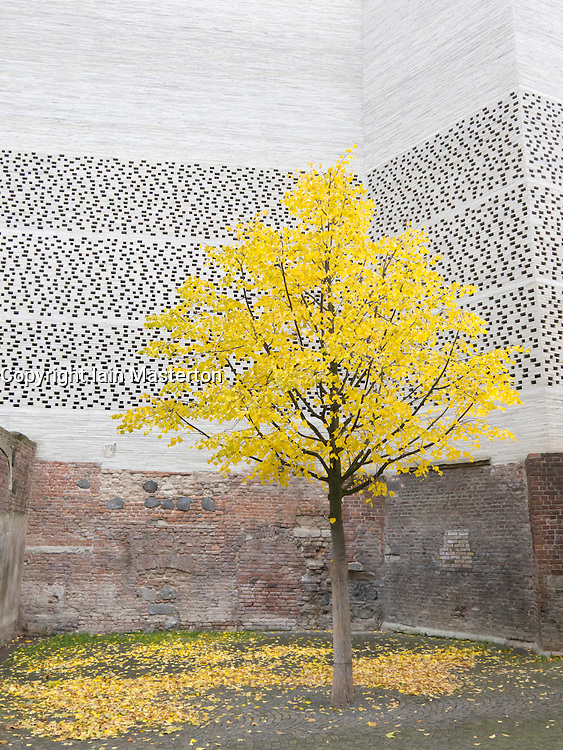Yellow leaves on tree outside modern architecture of Kolumba Museum in Cologne Germany