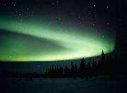 Green aurora arcing above white spruce forest near Colorado Lake, Broad Pass, night of March 23-24, 2001, Alaska.