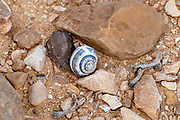 Israel, A pile of empty snail shells Photographed in Nahal  Tzeelim [Tze'eelim Stream], Negev Desert, Israel  in December