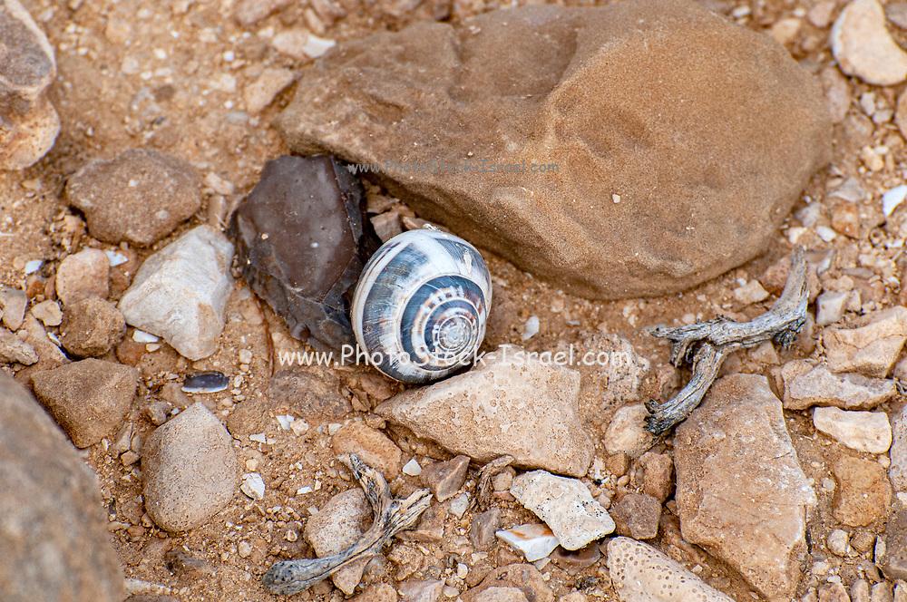Israel, A pile of empty snail shells Photographed in Nahal  Tzeelim [Tze'eelim Stream], Negev Desert, Israel  in December