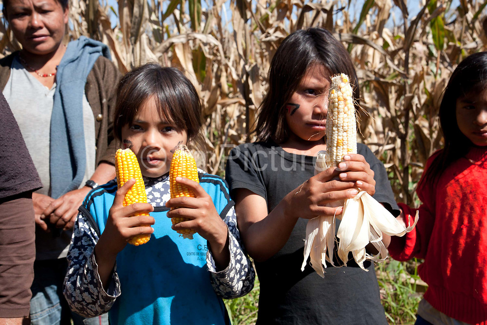 Guarani children showing the comparison of their own corn grown organically and the GM large monoculture corn from the neightbouring farms whom there are and disputes with. The Guarani are one of the most populous indigenous populations in Brazil, but with the least amount of land. They mostly live in the State of Mato Grosso do Sul and Mato Grosso. Their tradtional way of life and ancestral land is increasingly at risk from large scale agribusiness and agriculture. There have been recorded cases and allegations of violence between owners of large farms and the Guarani communities in this region.