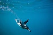 Galapagos Islands Photos - Stock Photos of the Galapagos Islands