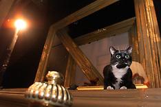 WEST END Theatre Cats 2000
