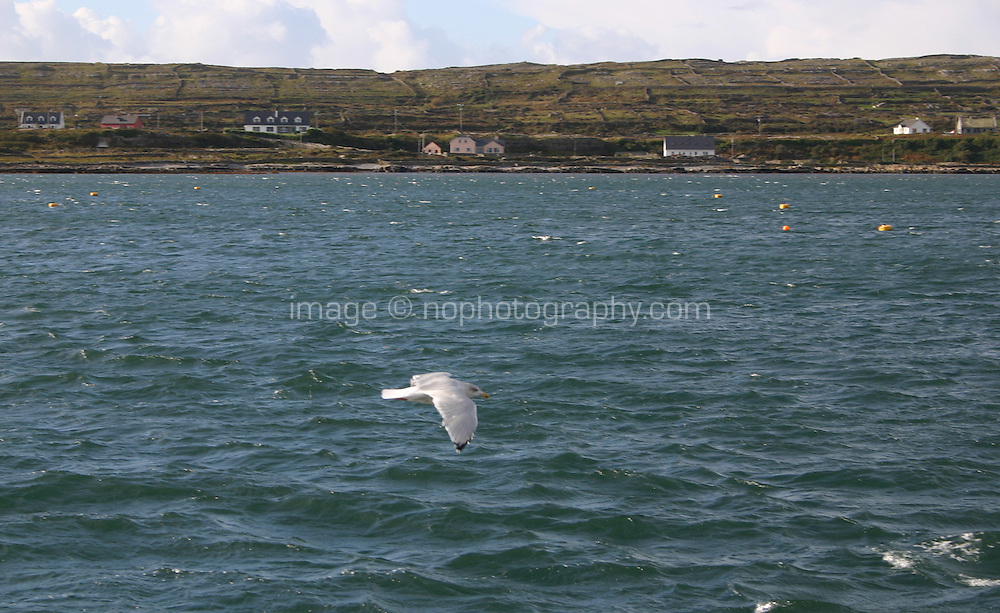 Seagul flying past the Aran Islands County Galway
