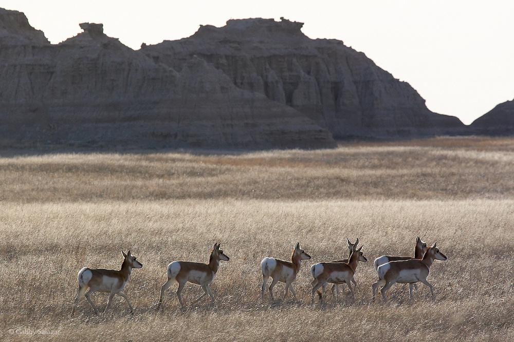 Sign, Badlands National Park, South Dakota., Badlands National Park, South Dakota, USA.
