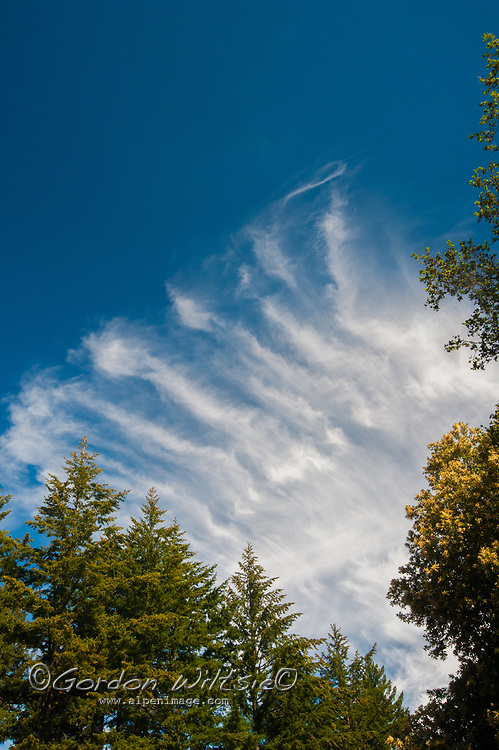 """Cirrus """"Mare's Tails"""" clouds hover above the California Coastal Mountains in the San Francisco Bay Area."""