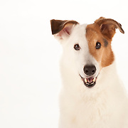 Mixed Breeds/Mutts