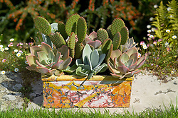 Cacti and succulents planted in a decorative container made by Alan Caiger-Smith. Opuntias, echeveria and Cotyledon orbiculata