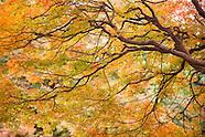Autumn in Tokyo's Shinjuku Gyoen National Garden