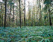Forest floor of ferns and trees
