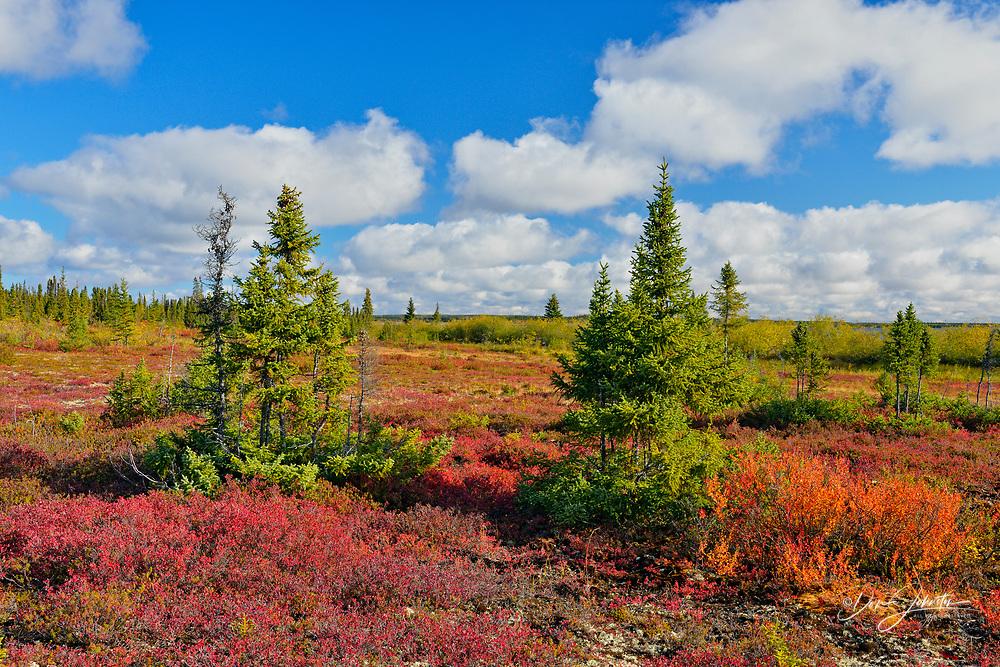 Autumn colour in the tundra near Ennadai Lake, Arctic Haven Lodge, Northwest Territories, Canada