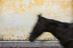 Horse in motion in front of colorful, painted wall, Antigua, Guatemala