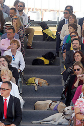24.09.2015, Madrid, ESP, 25 Jahre Perro Guia ONCEs Foundation, im Bild Guide dogs // during the 25th anniversary of 'Perro Guia ONCE's Foundation'. in Madrid, Spain on 2015/09/24. EXPA Pictures © 2015, PhotoCredit: EXPA/ Alterphotos/ Acero<br /> <br /> *****ATTENTION - OUT of ESP, SUI*****