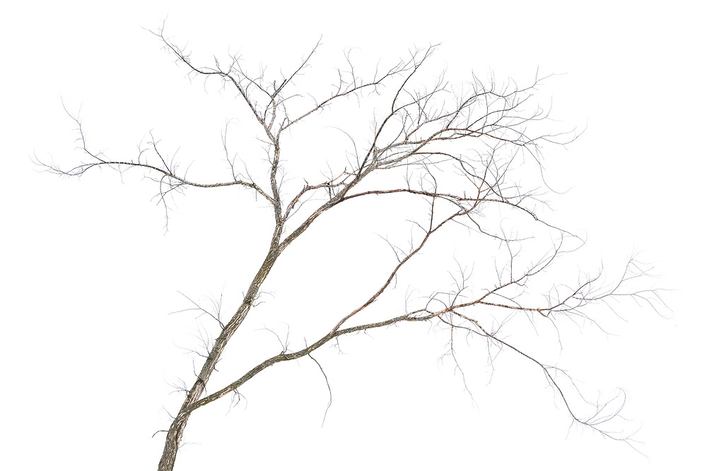 https://Duncan.co/small-tree-branches
